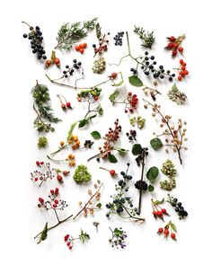 Gardening Autumn - wild berries (mary jo hoffman) - With the arrival of rains and falling temperatures autumn is a perfect opportunity to make new plantations Motif Floral, Arte Floral, L Wallpaper, Theme Nature, Nature Collection, Seed Pods, Botanical Prints, Wild Flowers, Fresh Flowers