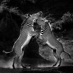 Awesome Zebra Photo
