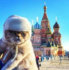 Grumpy cat: Moscow edition.