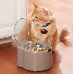 WonderBowl™ Selective Feeder…feeds only the cat who is wearing the collar