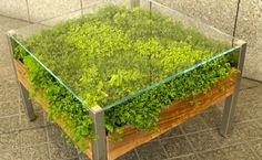 Living plant table from David Brenner on Zaarly