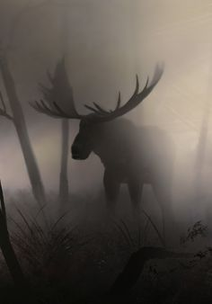 A moose in fog - pics Moose Deer, Moose Art, Bull Moose, Beautiful Creatures, Animals Beautiful, Animals And Pets, Cute Animals, Moose Pictures, Tier Fotos