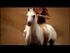 Natural Horsemanship: My Immortal  My dream is to ride a horse bareback and bridle-less in the Sahara desert