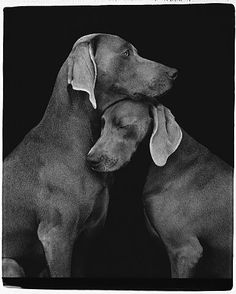 William Wegman.