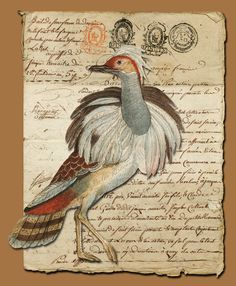 Houbara Bustard {a caption contest} - old papers