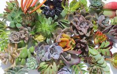 DIY felt succulents - Google Search