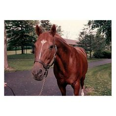 Secretariat. The Greatest Horse thar never ran in the Breeder's Cup Classic