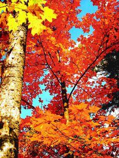 ♥ blue sky peeking through the autumn leaves