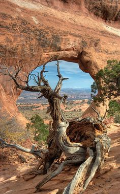 Visit all of the US National Parks Arches National Park, Utah. I've been there, I've seen that & I may've sat on that tree. All Nature, Amazing Nature, Beautiful World, Beautiful Places, Landscape Photography, Nature Photography, Jolie Photo, Parcs, Beautiful Landscapes