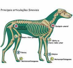 #articulações #medicinaveterinaria #veterinária #animals #animais #pets