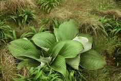 clump Stipa, Plant Leaves, Grasses, Plants, Lawn, Grass, Flora, Plant, Herb