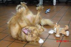 playin pup