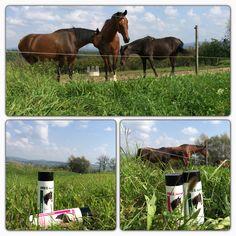 Váš kůň vás miluje, ne pro váš vzhled, ale pro vaši lásku. Dopřejte mu jen tu nejlepší péči s našimi produkty IREL Horse. Navštivte náš e-shop: http://www.irel.eu/pets/85-irel-horse
