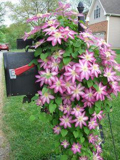 Flowers Around Mailbox Ideas Garden . Mailbox Plants, Mailbox Flowers, Mailbox Garden, Small Yard Landscaping, Mailbox Landscaping, Landscaping Ideas, Landscaping Melbourne, Lawn And Landscape, Landscape Design
