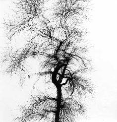 Harry Callahan, Multiple Exposure Tree
