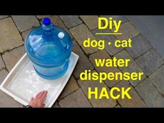 Diy ● DOG CAT water dispenser HACK ● self filling - YouTube