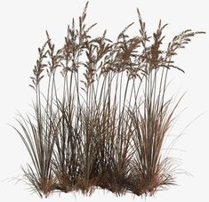 Plants texture photoshop ideas for 2019 Architecture Graphics, Architecture Drawings, Photomontage, Photoshop Images, Grass Photoshop, Plant Texture, Halloween Magic, Montage Photo, Aquatic Plants