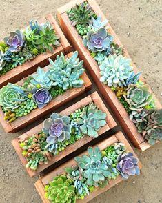 Succulent Arrangements in Wooden Crates - Wedding Centerpiece Idea