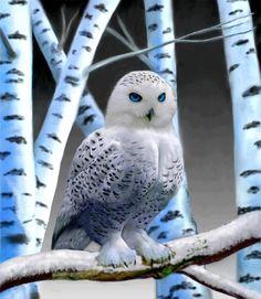 Blue-eyed owl