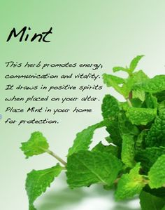 ✯Mint, Salt, Holly, and a few other's and their properties ✯