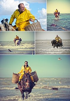 Go paint horses being used for shrimping. As of today the shrimp fishermen on horseback at the Belgian coast are UNESCO World Heritage! Luxembourg, Belgium Europe, Living In Europe, Slow Travel, World Heritage Sites, Little Pony, Shrimp, Vintage Posters, History