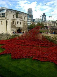 | Tower of London Poppy installation |
