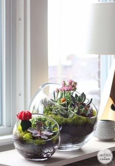 Mini Succulent garden in glass bowl