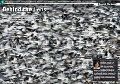 """Jacqueline Deely Photography Blog: """"Behind the Lens"""" - Wild Planet Magazine"""