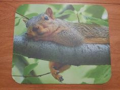 FREE shipping!  Squirrel Mouse Pad - Lazy Squirrel