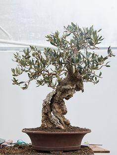 Bonsai 289