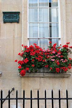 the curious bumblebee - Window Box on House bearing Here Dwelt General. Window Box Flowers, Window Boxes, Flower Boxes, Window Sill, Balcony Window, Container Gardening, Flower Gardening, Looking Out The Window, Window Dressings