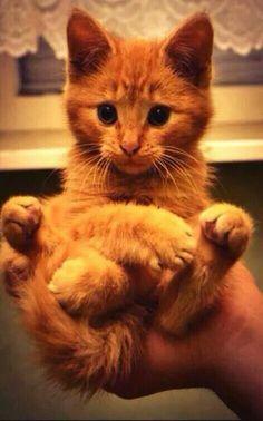 Cat-Tastick!!!!!