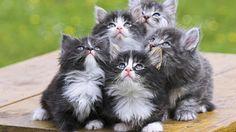 Imágenes de Gatos - Vol.2 (21 Fotos)
