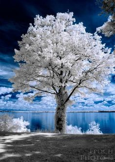 "Infrared, or ""IR"" photography, offers photographers the opportunity to explore the world of the unseen. This is an introduction to infrared photography - by Bob Vishneski. Infrared Photography, Landscape Photography, Nature Photography, Photography Camera, Winter Beauty, Winter Scenes, Snow Scenes, Amazing Nature, Belle Photo"