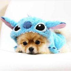 Stitch :3 #tierno adorable