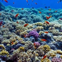Since the threats to coral reefs vary depending on location, scientists are customizing solutions to help them survive. Coral Reefs, Get Outside, Scientists, The Great Outdoors, Survival, Ocean, Earth, Learning, Creative