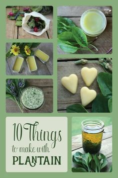 Here are 10 useful things you can make with plantain leaves: infused oil, coconut plantain balm, plantain lip repair, plantain lotion bars, lavender plantain bath salts, lavender plantain lotion, herbal plantain bath bags, plantain infused vinegar, plantain poultice