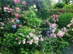 Plants, Nature, Nice Asses, Plant, Planets