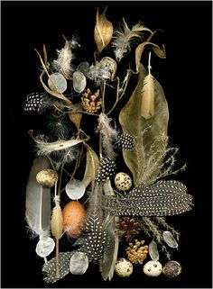 Nesting 4, Still Life - Scanner Photography By Ellen Hoverkamp