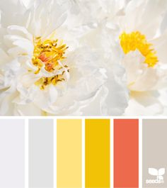 white yellow red