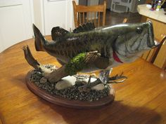 This is my goal this summer! Get a large mouth bass and get it mounted!