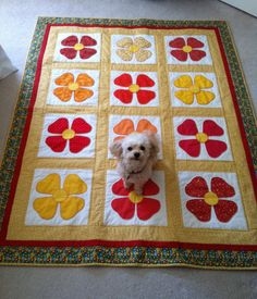 April 23 Todays Featured Quilts 24 Blocks