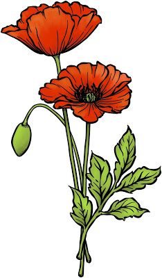 Originally Designed: March 2011 Remastered: March 2018 Original artwork by Beccy Muir, all rights reserved. Images are for person. Fabric Painting, Painting & Drawing, Watercolor Paintings, Anzac Poppy, Flowers Illustration, Poppy Drawing, Flower Drawing Tutorials, Sunflower Cards, Watercolor Flowers