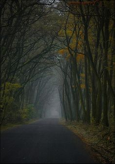 The road of life wound miles, or was it only feet, ahead of me, full of endless and remarkable possibilities