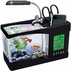 A small fish tank I can put on my desk when I finally get a home office.