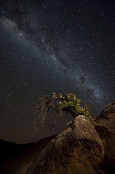 "awkwardsituationist: ""photos by mark dumbleton of (click pic) baobabs trees in botswana's makgadikgadi pans (first photo) and mashatu game reserve (fourth photo); quiver trees in namibia's..."