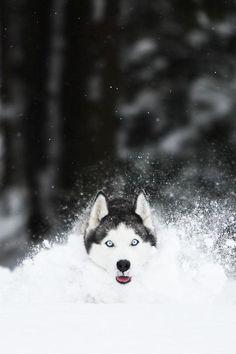 Enjoying snow