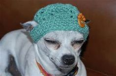 pinterest diy crochet pattern free for hats for dogs - Bing images