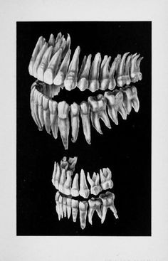 Adult to child dentition comparison source: thedifficulthead.tumblr