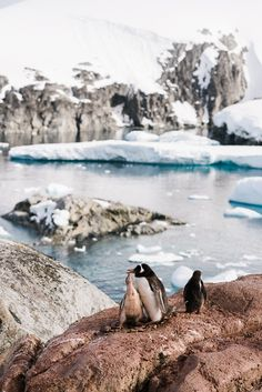Antarctica / Suk-Jae & Jae-In Kim (Weddingpilots)